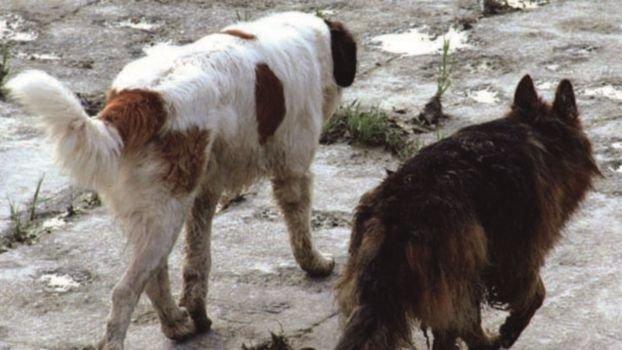 """Allevamento """"lager"""" a Solarolo, a giudizio anche 4 veterinari dell'Ausl"""