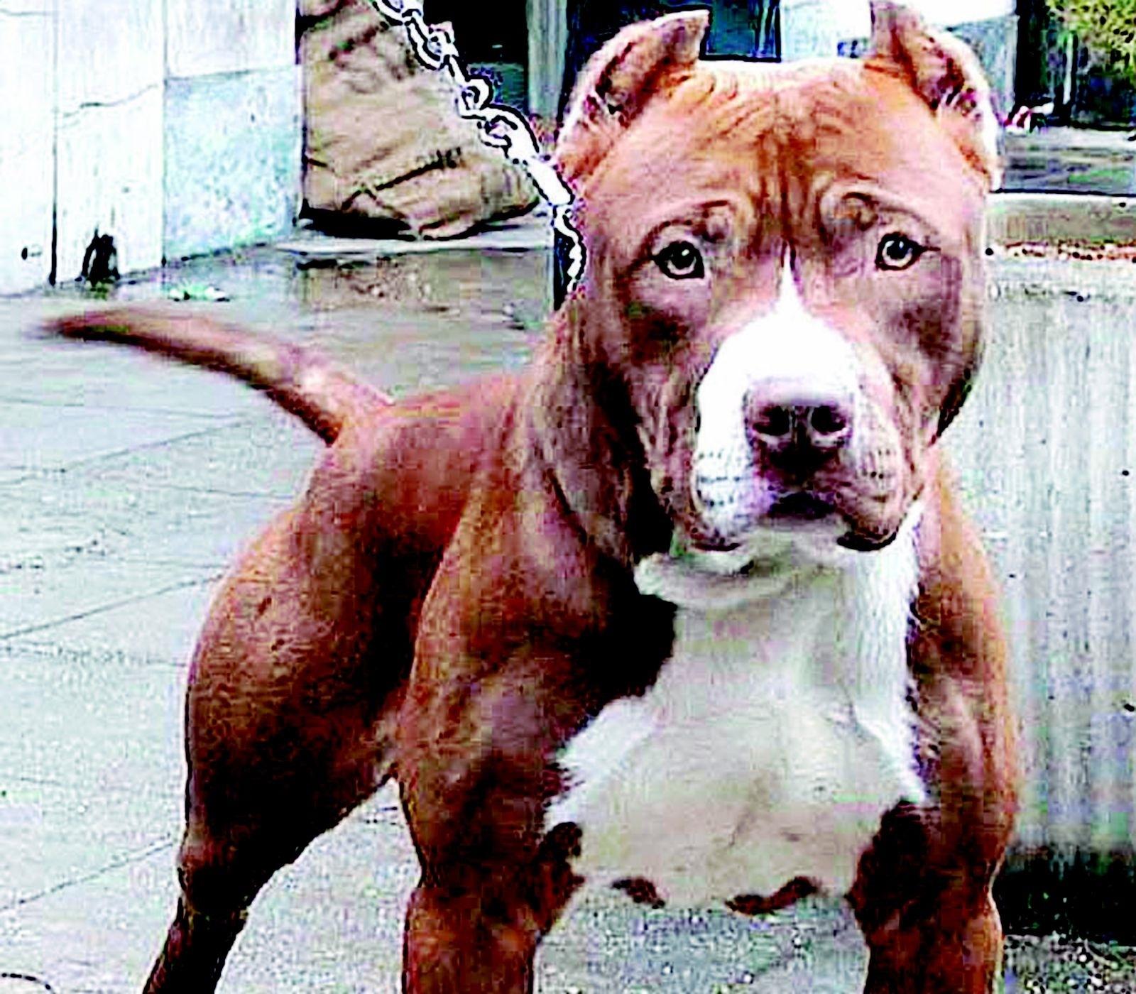 L'allarme dell'Enpa: sempre più cani di taglia grande abbandonati