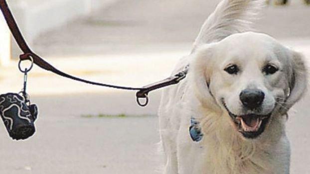 Coronavirus, Riccione limita le uscite con i cani