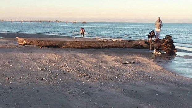 In spiaggia dopo il coronavirus, a Ravenna torna il Navetto mare