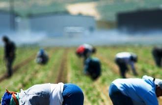 Lavoro nero nei campi, denunciato titolare di impresa agricola a Ravenna
