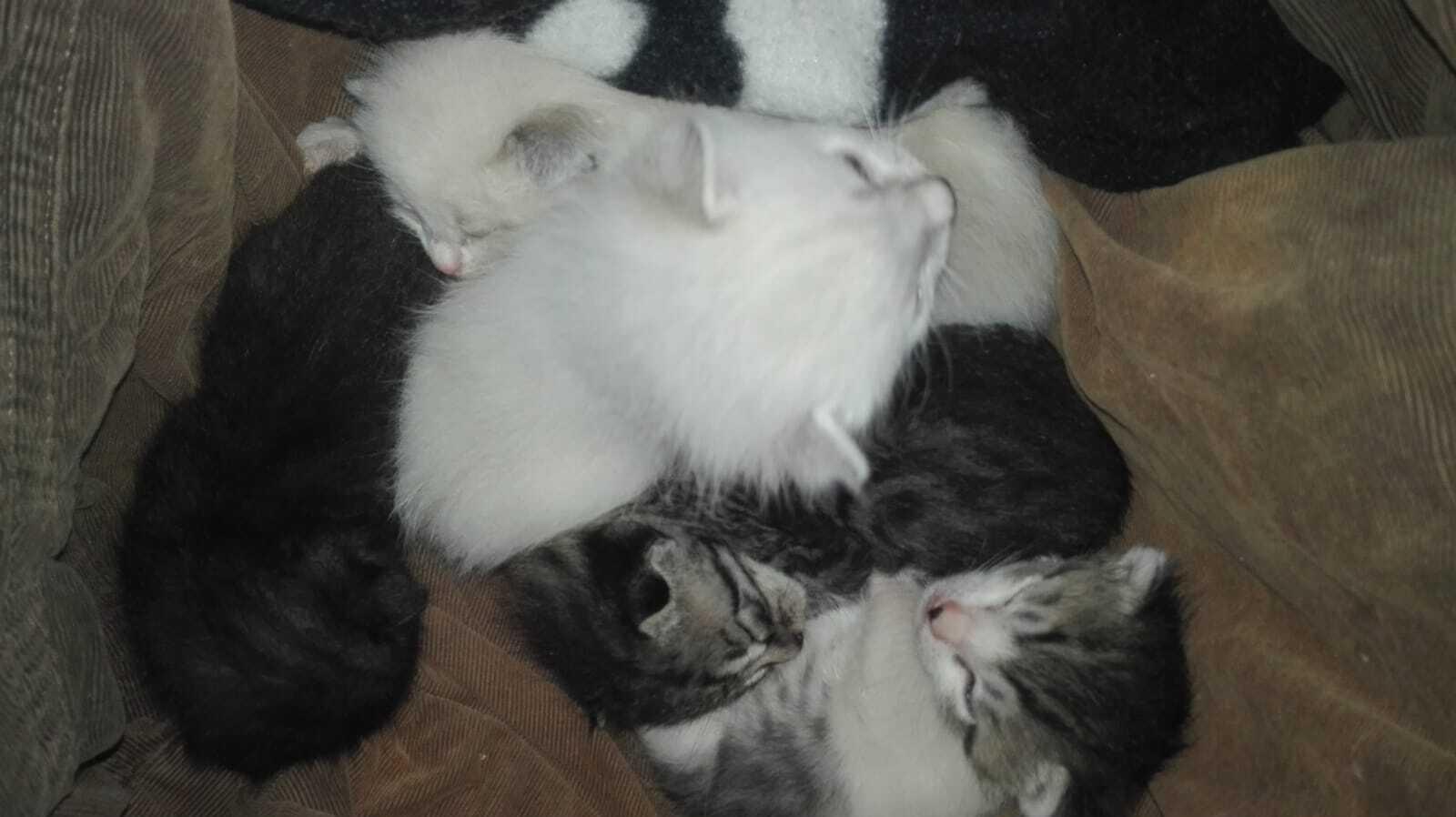 Voltana, cane a passeggio salva 5 gattini abbandonati in uno scatolone