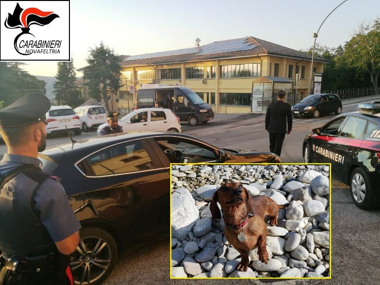 Minaccia con un pitbull una donna e il suo cagnolino: denunciato