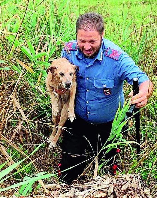 Ravenna, cagnolino cieco cade in un fosso: salvato dai carabinieri