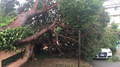 Tromba d'aria a Milano Marittima, 2.200 pini abbattuti, danni per 2 milioni
