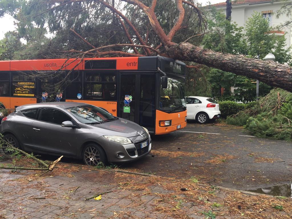 Milano Marittima, pini cadono su auto e autobus
