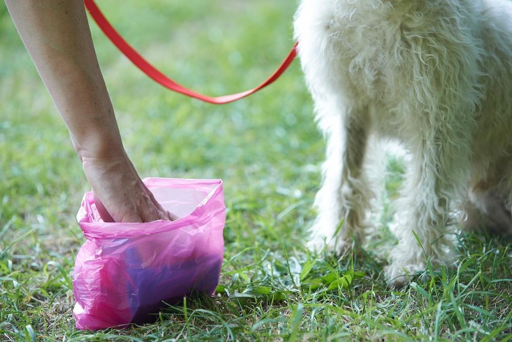 Non raccoglie gli escrementi del cane: multata a Rimini