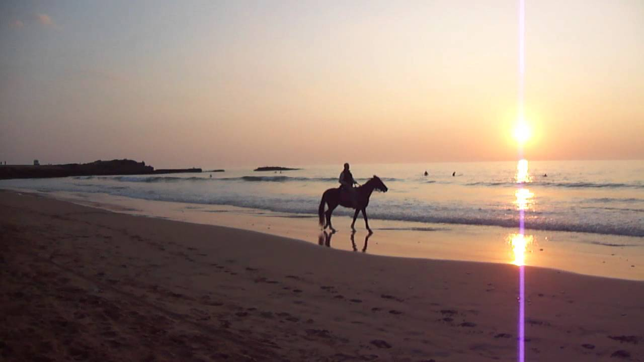 Ravenna, in spiaggia con i cavalli: scattano le multe