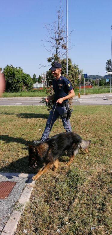 Rimini, vigili e poliziotti sgomberano gli accampamenti abusivi
