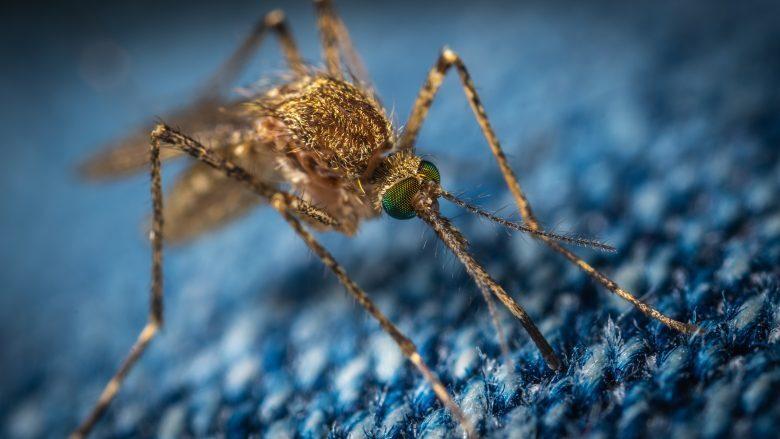 Caso di dengue a Forlì al ritorno dall'estero, partita la disinfestazione