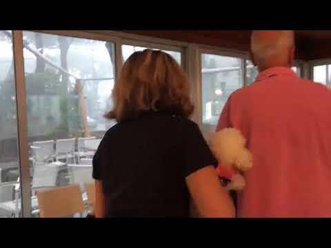 Tromba d'aria a Milano Marittima, albero sfiora i turisti a colazione VIDEO