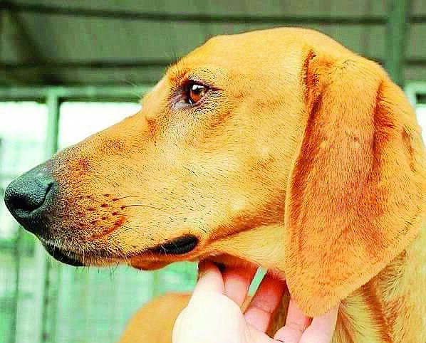 Ciko: il cane abbandonato perchè non adatto alla caccia