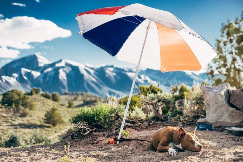 Proteggere cani e gatti dal caldo estivo   i Consigli del Veterinario