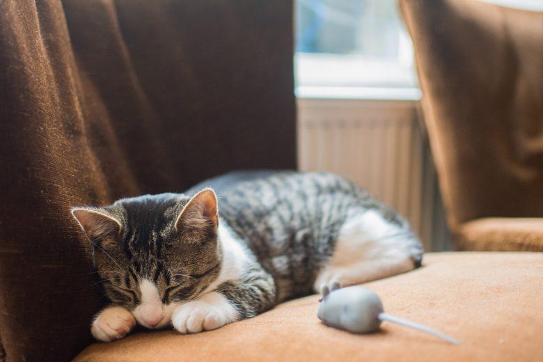 Pensioni, sitter o amici? Se cani e gatti non vanno in vacanza...
