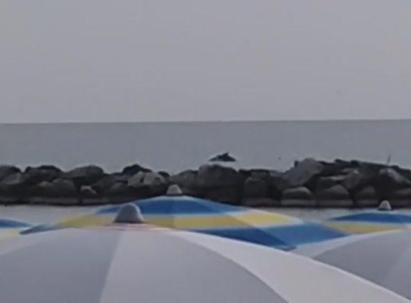 Bellaria, delfini filmati a pochi metri dalla riva. Il video