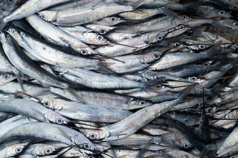 La rubrica di Affronte: mari in sofferenza per nutrire l'uomo