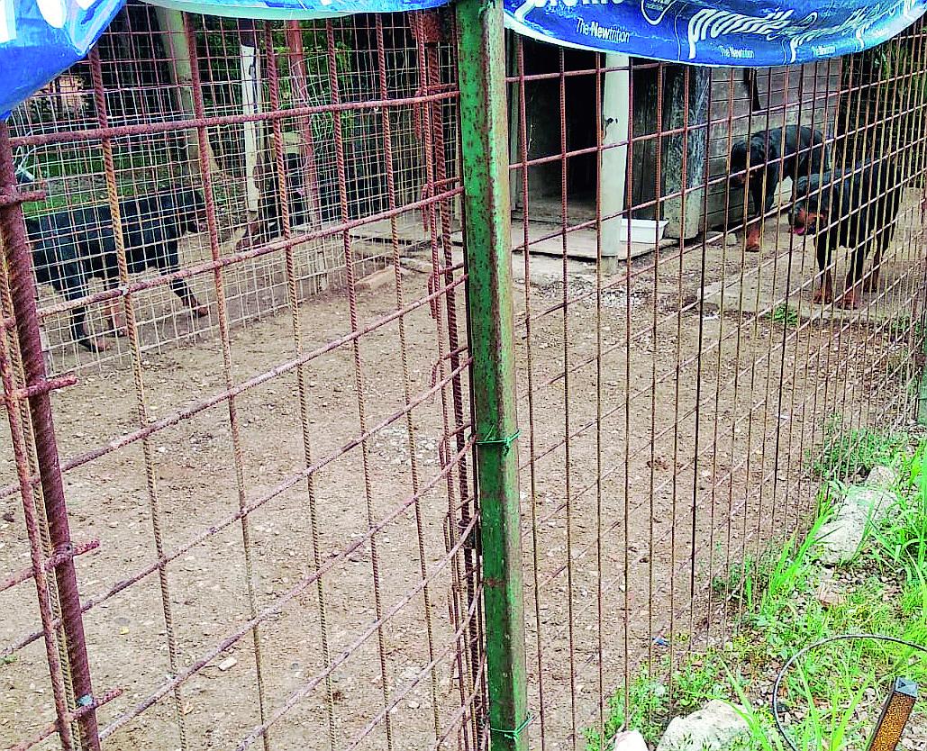 Cesena, sequestrati i rottweiler ancora chiusi a San Carlo