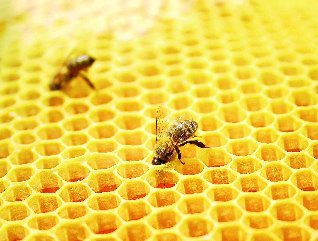 Annata amara per il miele in Romagna