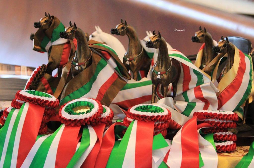 A San Giovanni in Marignano va in scena il Cavallo Purosangue Arabo