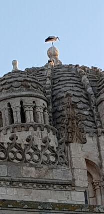 Verso Santiago: la città delle cicogne