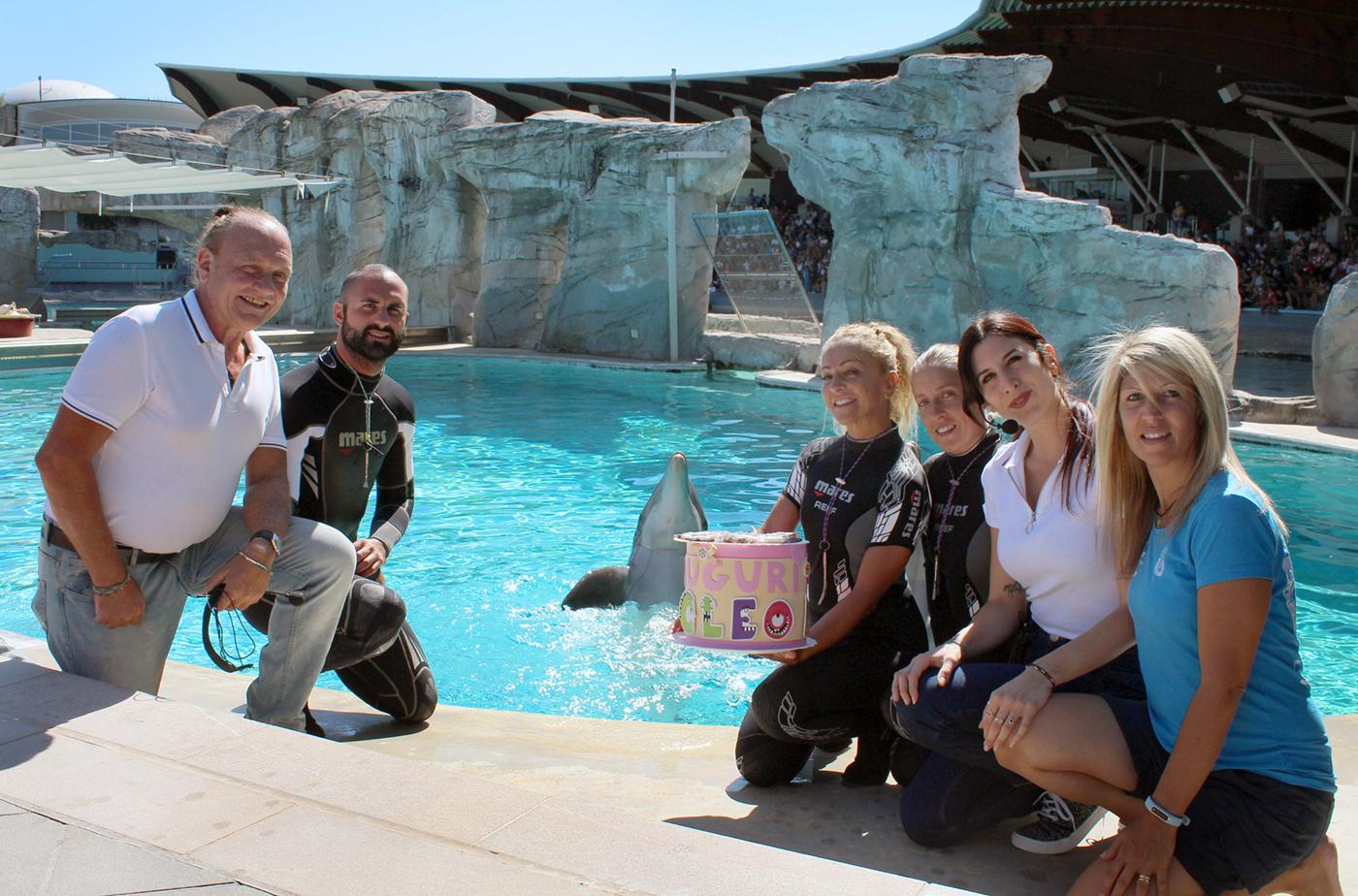 """Torte di pesci per i delfini """"fidanzatini"""" della Laguna di Riccione"""