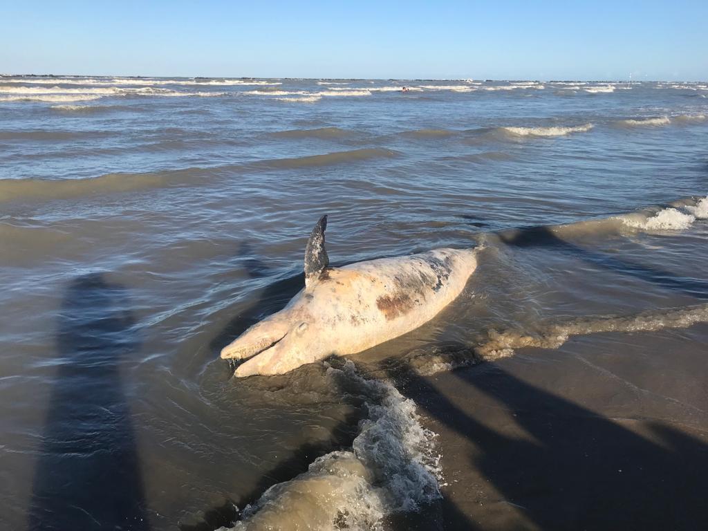 Delfino spiaggiato a Cesenatico - VIDEO