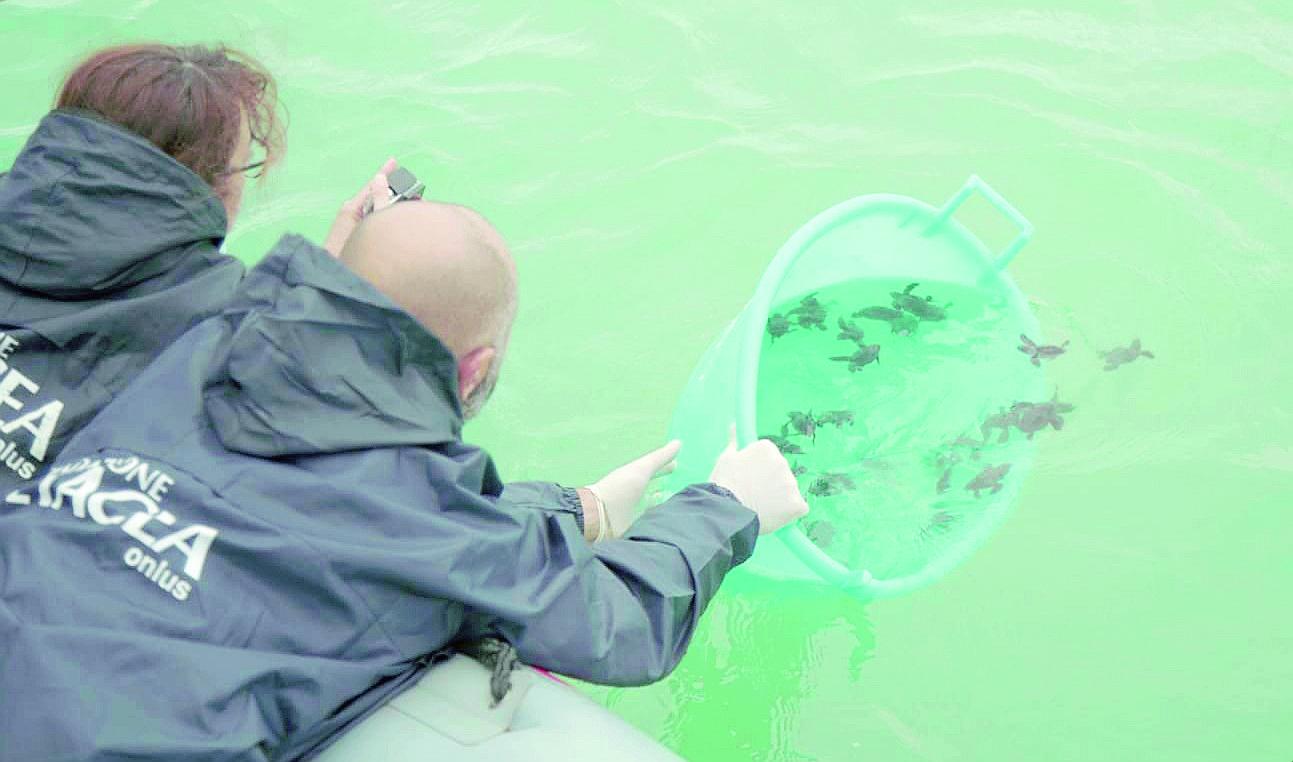 La Fondazione Cetacea di Riccione salva la vita a 32 tartarughine