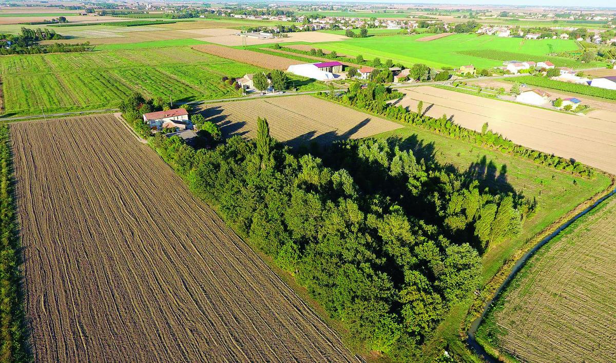 """Ravenna, a per ammirare il """"foliage"""" nei terreni riconvertiti a bosco"""