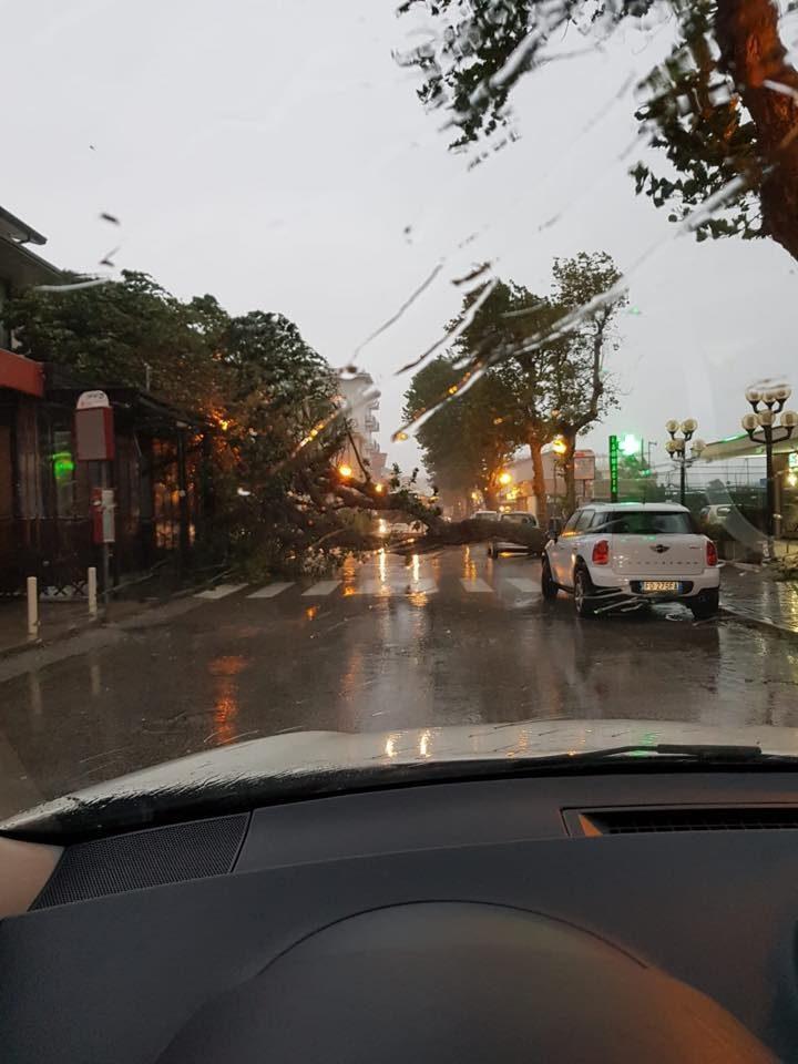 Raffiche di vento, alberi caduti, strade della Riviera in tilt