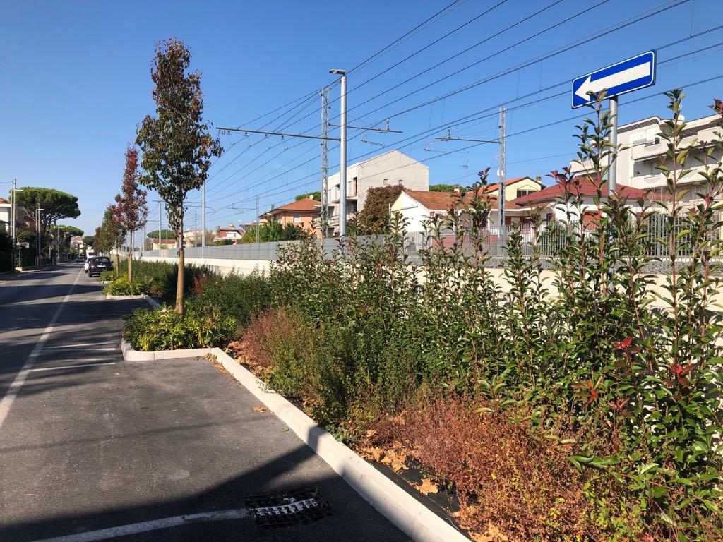 Una barriera verde a Riccione per mitigare l'impatto visivo del Trc