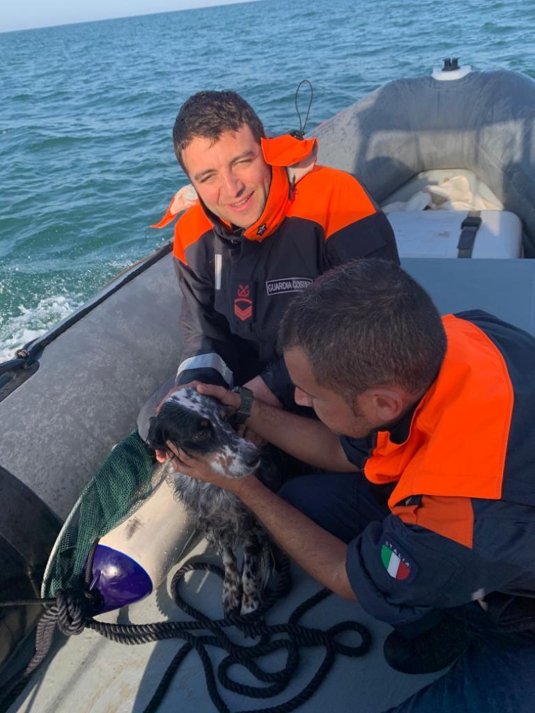 Cane in balia delle correnti a Porto Corsini salvato dalla Capitaneria