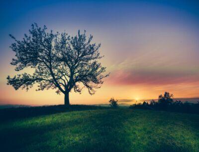 Affronte: una buona pratica, piantare alberi