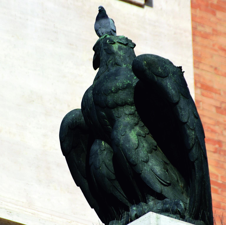 Forlì, falchi e corvi in piazza Saffi per contrastare i piccioni