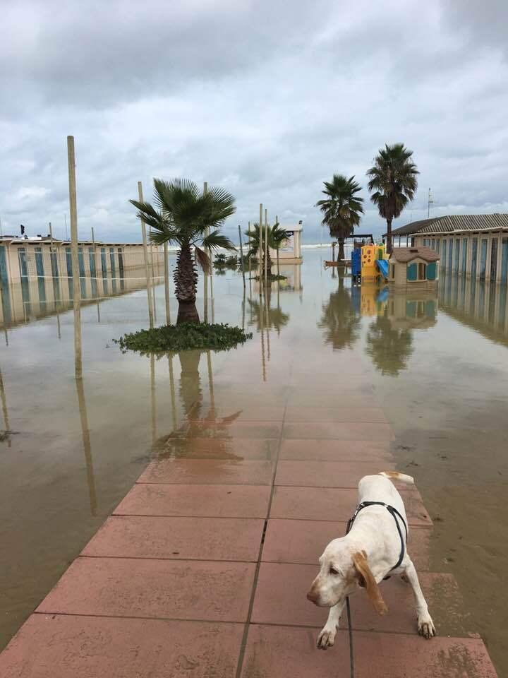 Alta marea, vento e pioggia. Nuova allerta meteo in Romagna