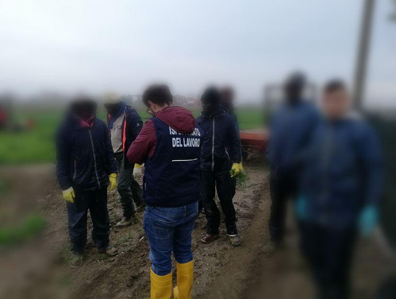 Rimini. Dieci lavoratori in nero in agricoltura: multe per 22.000 euro