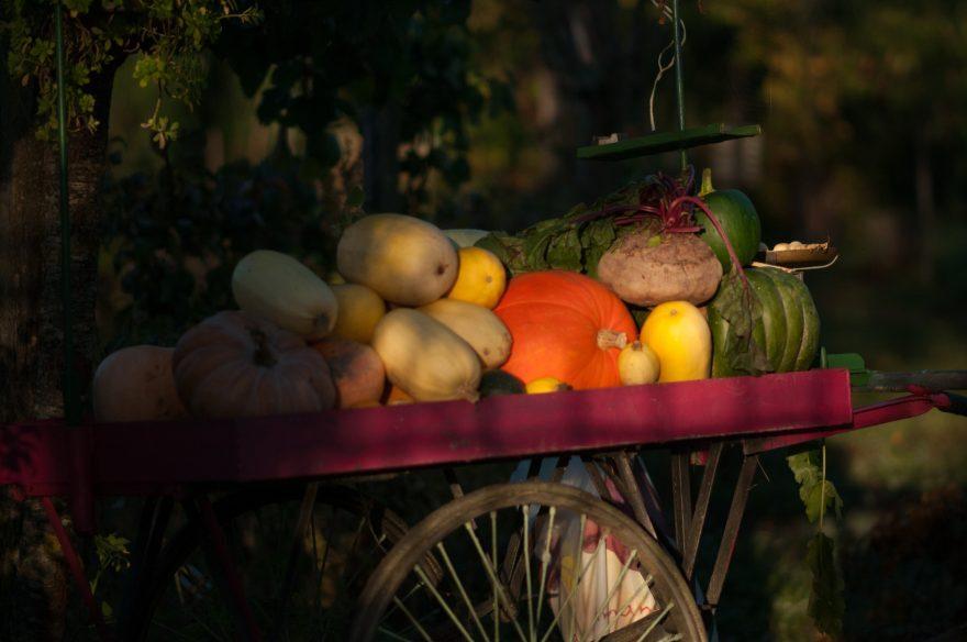 Bagnacavallo, ditta regala frutta e verdura a chi raccoglie mozziconi