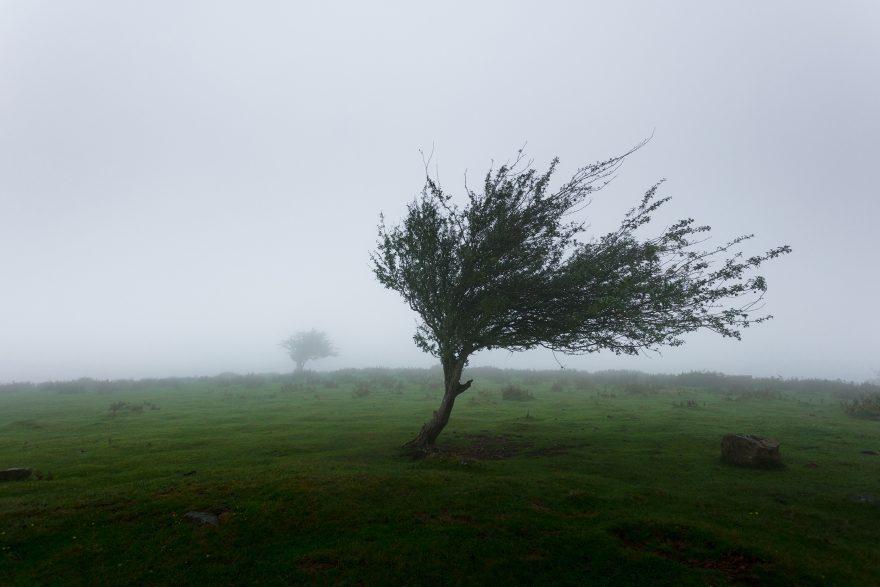 Ravenna, allerta meteo per il vento