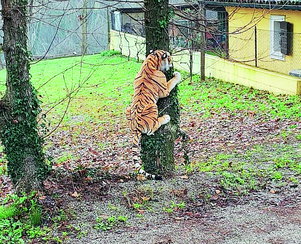 """Forlì, allarme per """"una tigre sull'albero"""". Ma era un peluche"""