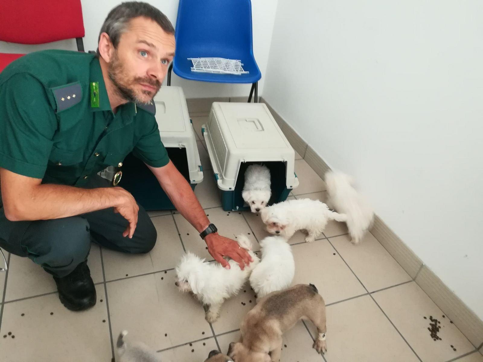 Truffa dei cuccioli via web, l'allarme delle Guardie zoofile di Rimini