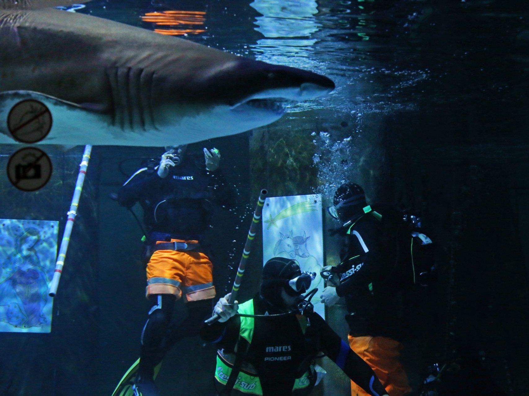 All'Acquario di Cattolica allestito un Presepe tra gli squali - VIDEO