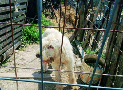 Condanna a 18 mesi per il cane impiccato nell'allevamento lager