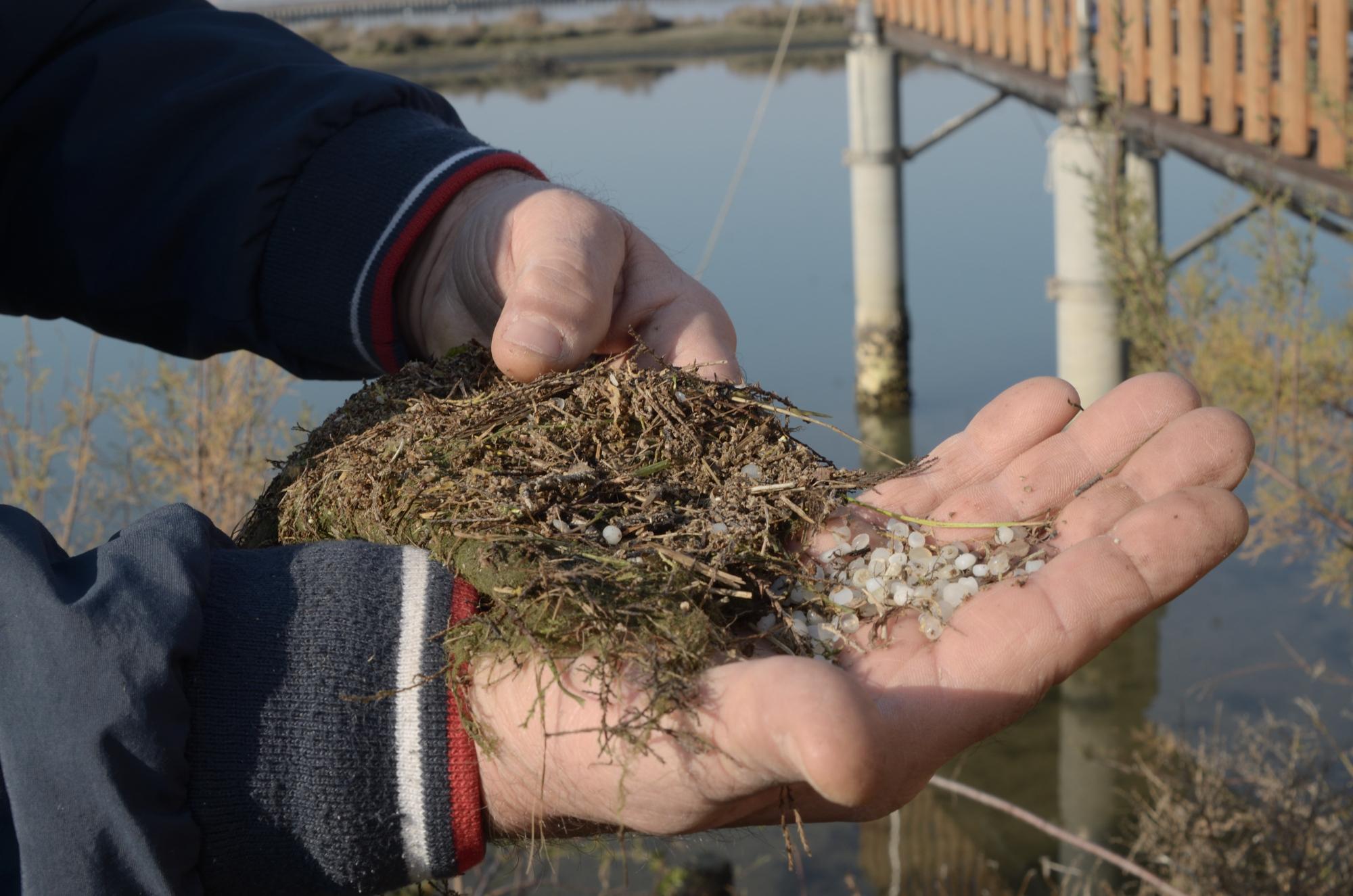 Ravenna, valle invasa da microplastiche. Nuovo allarme ambientale