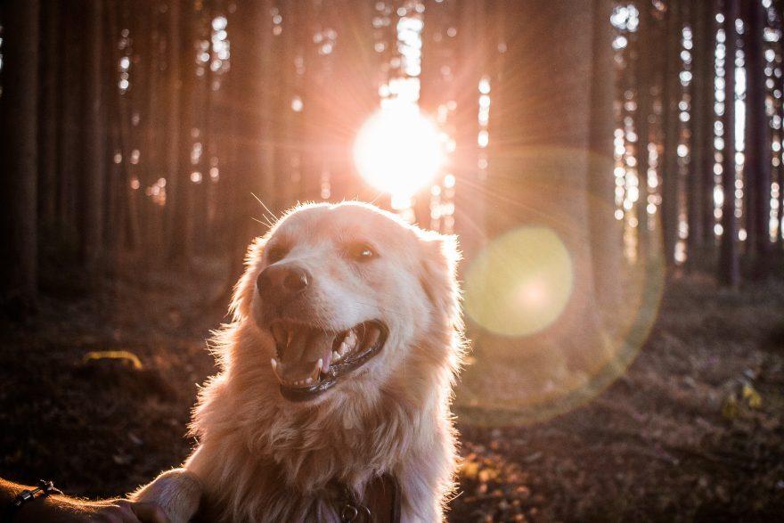 Troppi cani senza guinzaglio: San Clemente dice basta