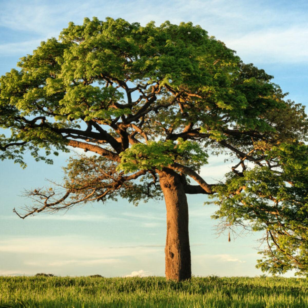 Coriano, gli studenti escono dall'aula e piantano 50 nuovi alberi