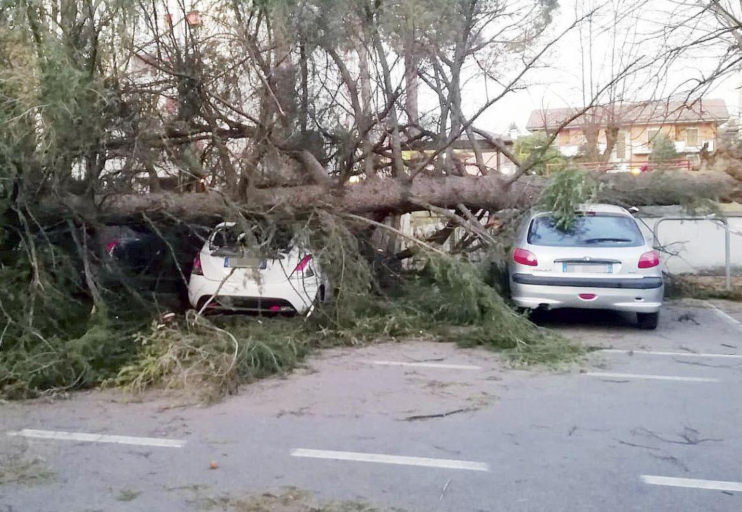 Vento a Cesena, albero sopra due auto e coppo dentro un'altra