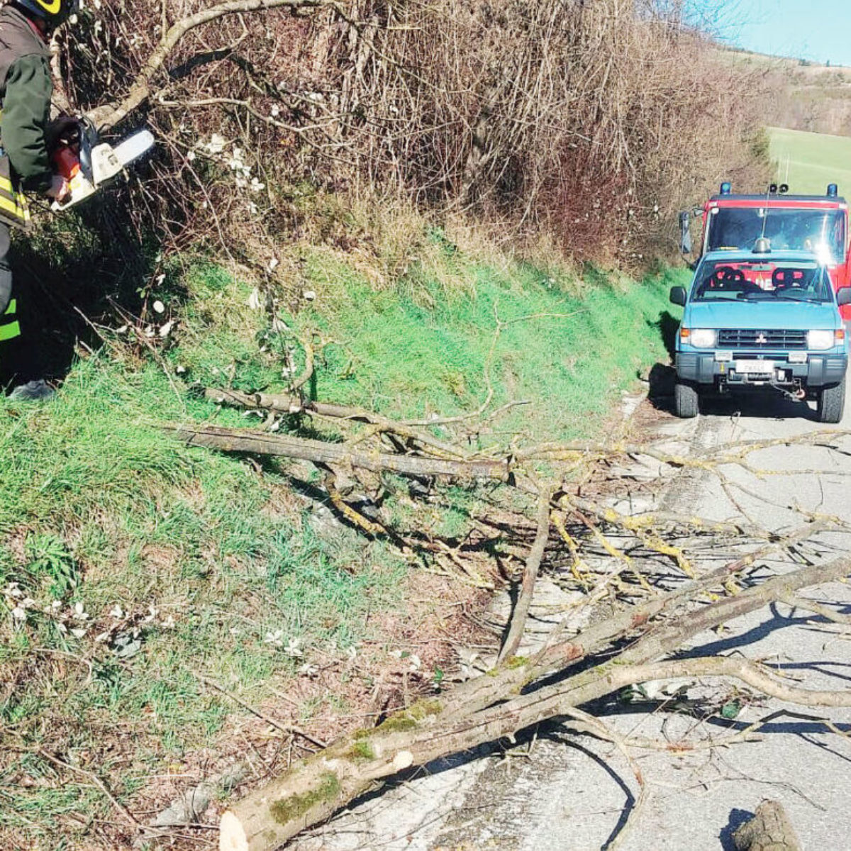 Raffiche di vento fino a 79 km/h. Rami spezzati e un albero caduto a Faenza