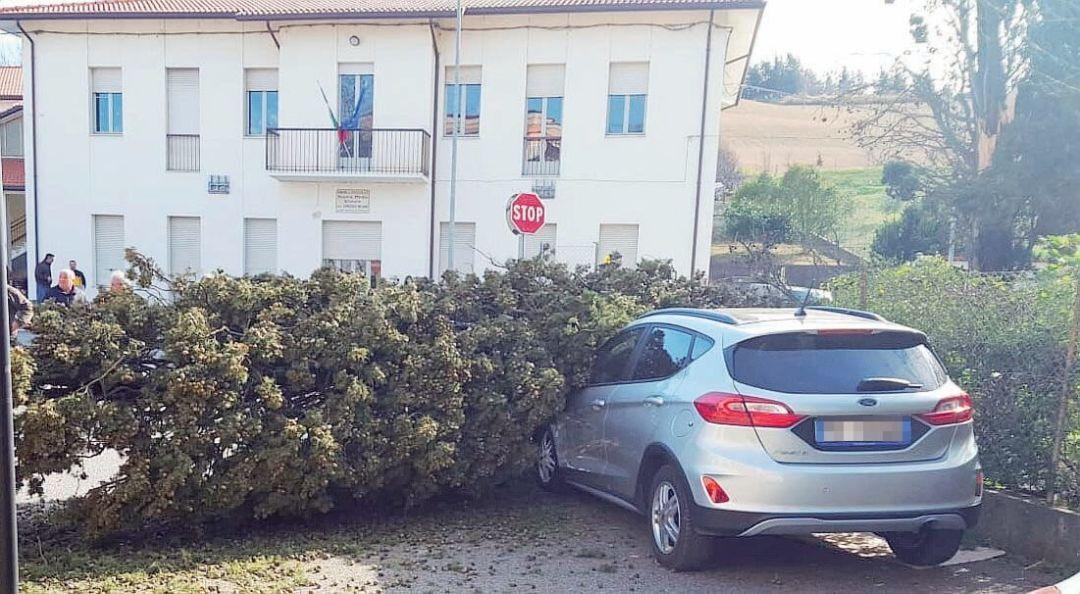 I cittadini devono potare gli alberi nelle loro proprietà
