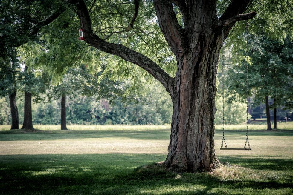 Nuovo Arboreto di Riccione, accesso gratuito al parco e case per dormire sugli alberi