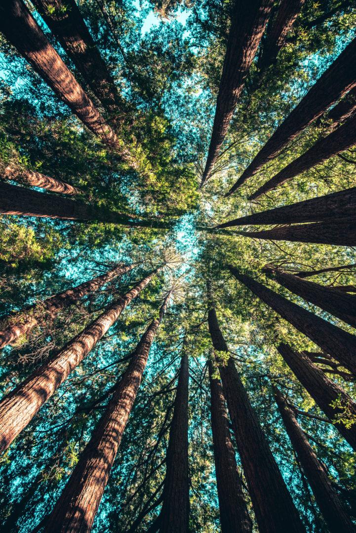 Affronte: come stanno le foreste italiane