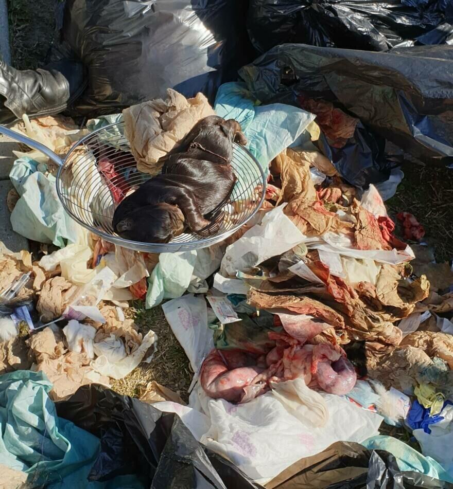 Feti di cani abbandonati a Faenza. Condannato veterinario di Forlì